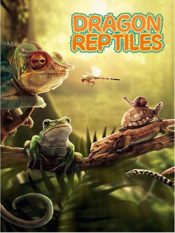 Dragon Reptiles